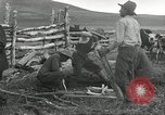 Image of cattle branding United States USA, 1918, second 9 stock footage video 65675066753