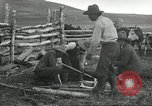 Image of cattle branding United States USA, 1918, second 10 stock footage video 65675066753