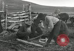Image of cattle branding United States USA, 1918, second 12 stock footage video 65675066753