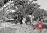 Image of date palm harvest and packaging Los Angeles California USA, 1920, second 5 stock footage video 65675066803