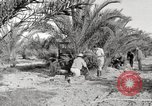 Image of date palm harvest and packaging Los Angeles California USA, 1920, second 7 stock footage video 65675066803