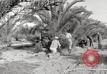 Image of date palm harvest and packaging Los Angeles California USA, 1920, second 9 stock footage video 65675066803
