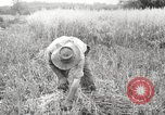 Image of wheat field United States USA, 1920, second 1 stock footage video 65675066806