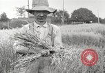 Image of wheat field United States USA, 1920, second 3 stock footage video 65675066806