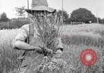 Image of wheat field United States USA, 1920, second 4 stock footage video 65675066806