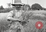 Image of wheat field United States USA, 1920, second 5 stock footage video 65675066806