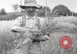 Image of wheat field United States USA, 1920, second 6 stock footage video 65675066806