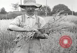 Image of wheat field United States USA, 1920, second 7 stock footage video 65675066806