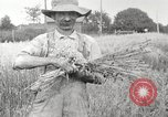 Image of wheat field United States USA, 1920, second 8 stock footage video 65675066806