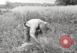 Image of wheat field United States USA, 1920, second 9 stock footage video 65675066806