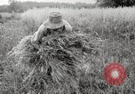Image of wheat field United States USA, 1920, second 11 stock footage video 65675066806