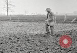 Image of planting of potatoes United States USA, 1920, second 4 stock footage video 65675066807