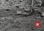 Image of planting of potatoes United States USA, 1920, second 7 stock footage video 65675066807
