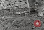 Image of planting of potatoes United States USA, 1920, second 8 stock footage video 65675066807