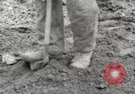 Image of planting of potatoes United States USA, 1920, second 11 stock footage video 65675066807