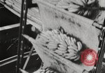Image of unloading of bananas New Orleans Louisiana USA, 1917, second 5 stock footage video 65675066817