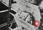 Image of unloading of bananas New Orleans Louisiana USA, 1917, second 6 stock footage video 65675066817