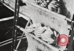 Image of unloading of bananas New Orleans Louisiana USA, 1917, second 7 stock footage video 65675066817