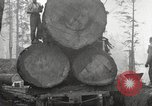 Image of lumbering United States USA, 1917, second 8 stock footage video 65675066833
