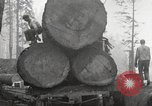 Image of lumbering United States USA, 1917, second 9 stock footage video 65675066833