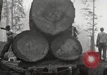 Image of lumbering United States USA, 1917, second 10 stock footage video 65675066833