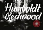 Image of Humboldt Redwoods State Park California United States USA, 1935, second 2 stock footage video 65675066950