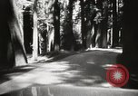 Image of Humboldt Redwoods State Park California United States USA, 1935, second 10 stock footage video 65675066950