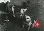 Image of Soviet space research with canines Soviet Union, 1957, second 2 stock footage video 65675067231