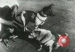 Image of Soviet space research with canines Soviet Union, 1957, second 3 stock footage video 65675067231
