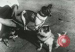 Image of Soviet space research with canines Soviet Union, 1957, second 4 stock footage video 65675067231