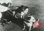 Image of Soviet space research with canines Soviet Union, 1957, second 5 stock footage video 65675067231