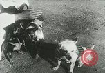 Image of Soviet space research with canines Soviet Union, 1957, second 6 stock footage video 65675067231