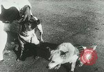 Image of Soviet space research with canines Soviet Union, 1957, second 7 stock footage video 65675067231