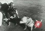 Image of Soviet space research with canines Soviet Union, 1957, second 8 stock footage video 65675067231