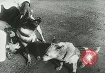 Image of Soviet space research with canines Soviet Union, 1957, second 9 stock footage video 65675067231