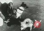 Image of Soviet space research with canines Soviet Union, 1957, second 11 stock footage video 65675067231