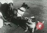 Image of Soviet space research with canines Soviet Union, 1957, second 12 stock footage video 65675067231