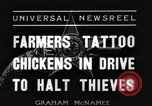 Image of ink mark proves chicken stealing Georgetown Washington DC USA, 1936, second 2 stock footage video 65675067257