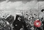 Image of Farming in America during wartime United States USA, 1944, second 4 stock footage video 65675067309