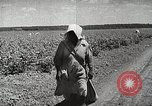 Image of Farming in America during wartime United States USA, 1944, second 6 stock footage video 65675067309