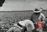 Image of Farming in America during wartime United States USA, 1944, second 12 stock footage video 65675067309