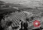Image of Guide with visitors at a farm Morocco North Africa, 1942, second 9 stock footage video 65675067421