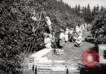 Image of Women and girls picking fruit in an orchard Morocco North Africa, 1942, second 1 stock footage video 65675067422
