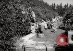 Image of Women and girls picking fruit in an orchard Morocco North Africa, 1942, second 3 stock footage video 65675067422