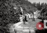 Image of Women and girls picking fruit in an orchard Morocco North Africa, 1942, second 4 stock footage video 65675067422