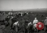 Image of Tilling the soil by machine and by animal Morocco North Africa, 1942, second 3 stock footage video 65675067423