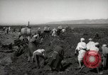 Image of Tilling the soil by machine and by animal Morocco North Africa, 1942, second 6 stock footage video 65675067423