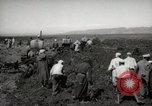 Image of Tilling the soil by machine and by animal Morocco North Africa, 1942, second 7 stock footage video 65675067423