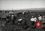 Image of Tilling the soil by machine and by animal Morocco North Africa, 1942, second 8 stock footage video 65675067423