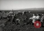 Image of Tilling the soil by machine and by animal Morocco North Africa, 1942, second 12 stock footage video 65675067423